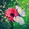 Tasarlayan saklı bahçe-Icecek & Gida toptancisi icin logo & kk